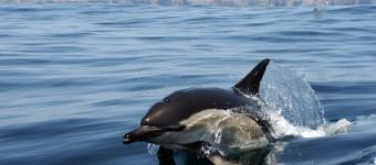 Beobachtung von Delfinen