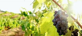 IHR eigener Wein kreieren-/mischen..
